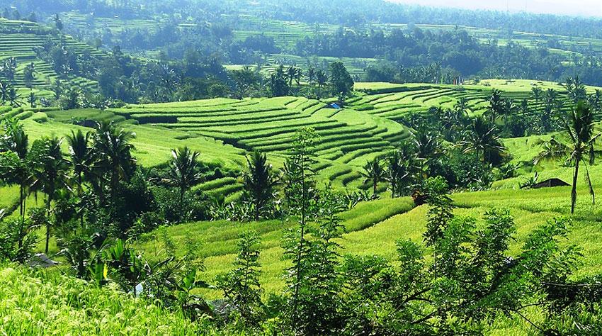 Jatiluwih terrazas de arroz - Viaje en Mochila